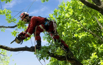 find trusted rated Flintshire tree surgeons