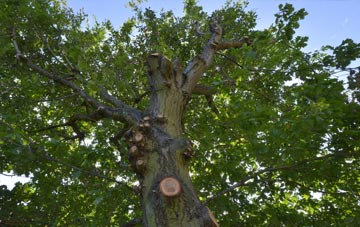 what is Flintshire tree surgery?